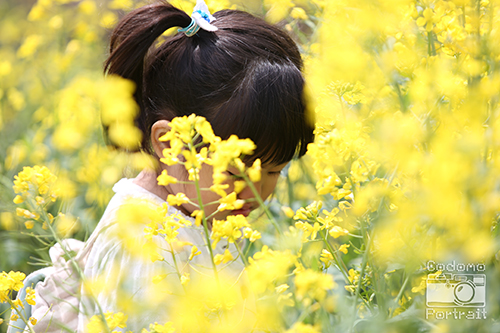 菜の花と2歳